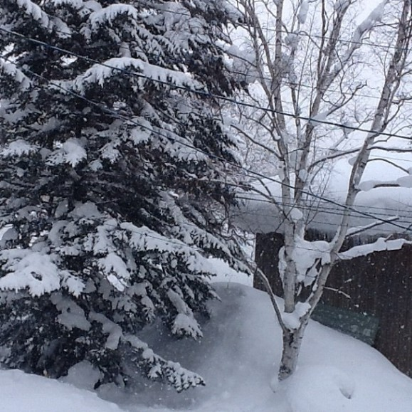 Knee deep powder all morning. Best snow of our lives @ #niseko